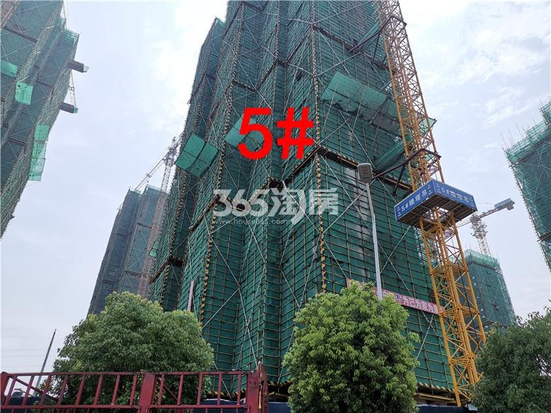 珍宝岛熙悦府在建5#实景图(7.26)