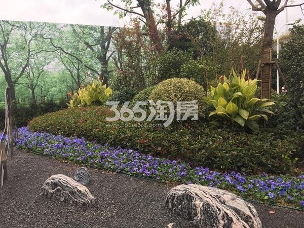 融侨悦府示范区实景图(2017.12 摄)