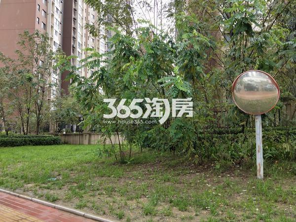 御锦城小区周边绿化实景(2017.10.10)