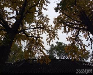 江宁-上坊祈泽佳苑2室1厅1卫70平米合租精装