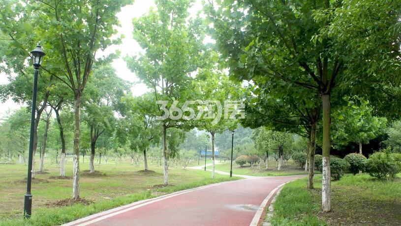 滨湖双玺周边公园环境实景图(2018.4.9)