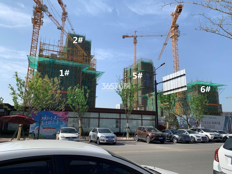 雅居乐雅尊府1、2、5、6号楼实景图(3.20)