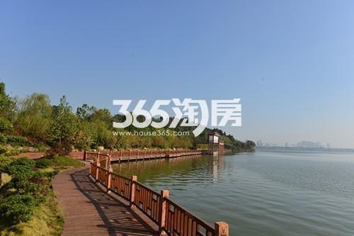南湖壹号实景图