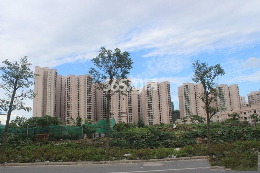 桐洋新城实景图