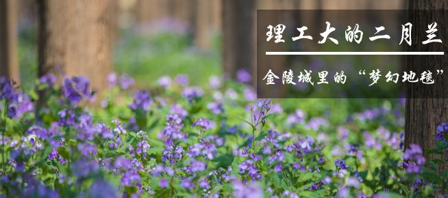 """光影石城339:浪漫金陵城里的""""梦幻地毯"""""""