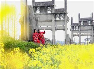 安徽古城歙县油菜花盛开吸引众游客