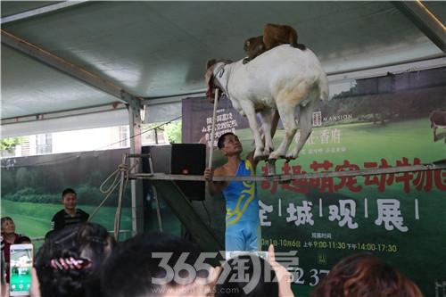(活动现场 365淘房 资讯中心)