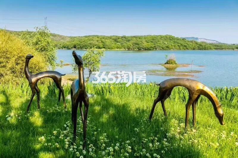 瑞安翠湖山绿化(9.5)