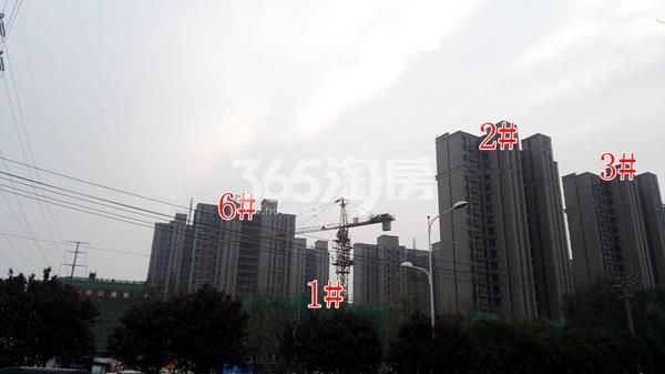 恒大滨河左岸部分高层工程实景(11.8)