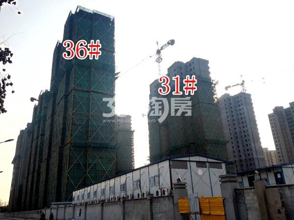 绿地工润和平壹号四期36#、31#工地实景图(11.15)