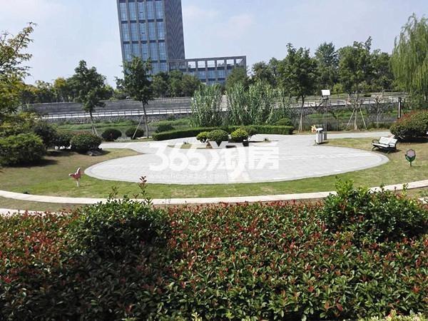 珍宝岛熙悦府旁高新区管委会和奎河公园实景图(9.8)