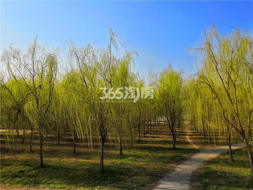 瑞泰・滨江公馆 周边淮河景观带实拍 201905
