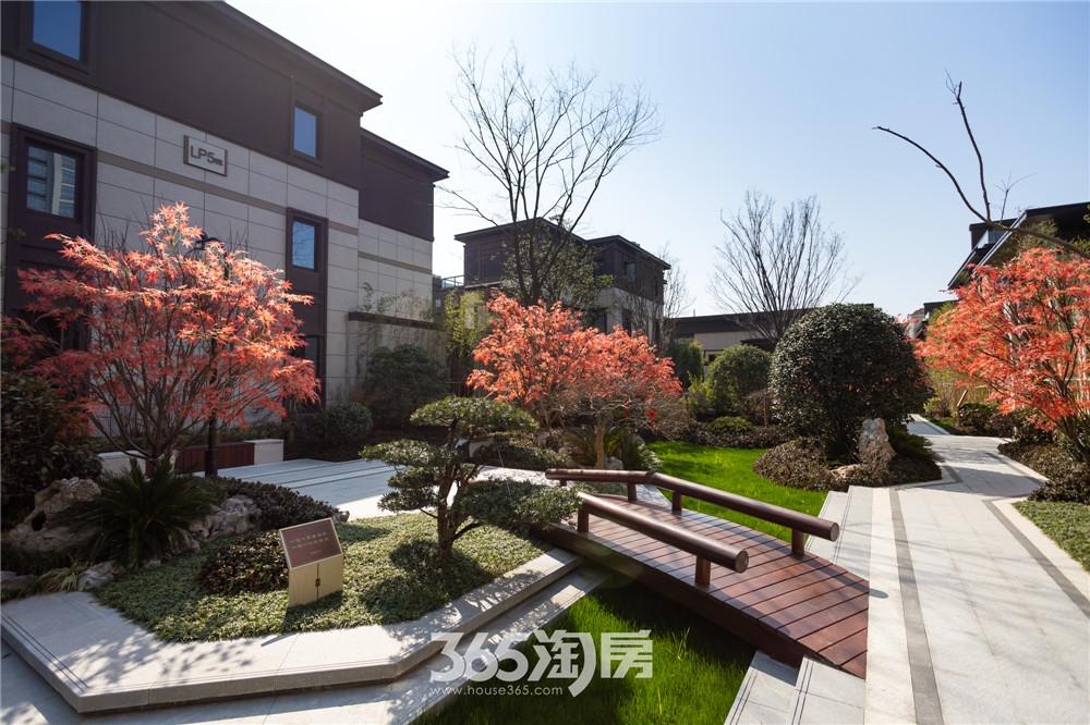 伟星芜湖院子东院园林实景,春色撩人(2020年3月摄)