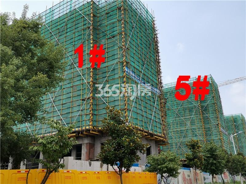蓝城蘭园在建1、5#楼实景图(7.26)