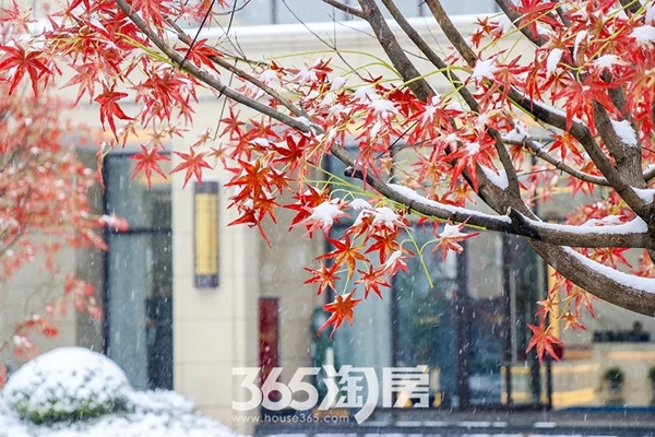 伟星金悦府雪景实景图-景观(2018.1摄)