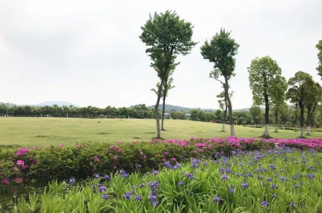 启迪方洲附近配套中央公园实景图(7.2)