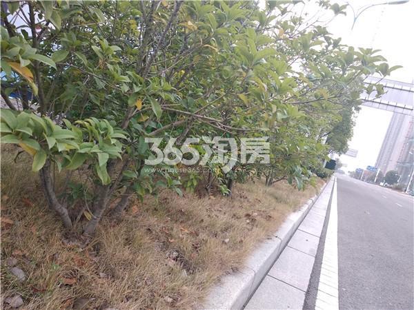 帝景珑湾 周边路边绿化实拍图 201812