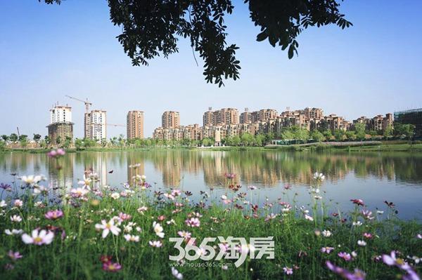 莲花湖美景