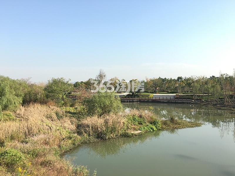 合景映月台排屋南面湿地实景图(2017.12)