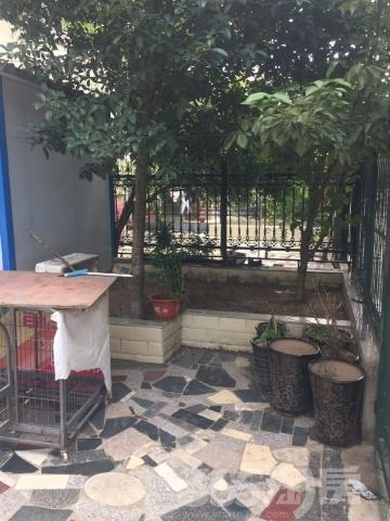 金水花园 淮委医院旁 一楼带大院子 双卧朝南 适合老年人居住