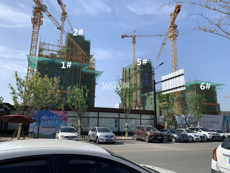 雅居乐雅尊府6、5、2、1号楼实景图(4.29)