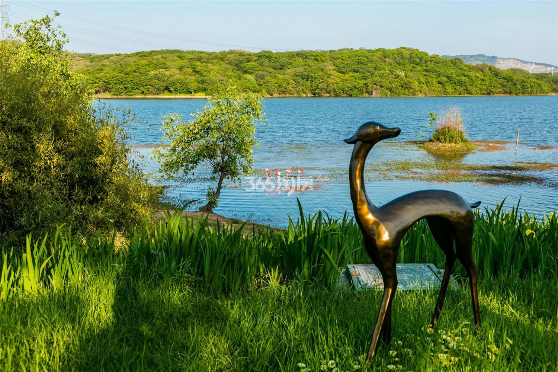 瑞安翠湖山景观实景(3.14)