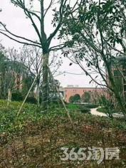 金科世界城 景观三房 边套通透 南湖学区房 南长核心地段