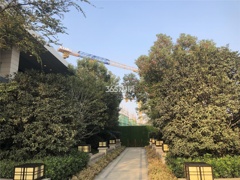 恒基旭辉玲珑翠谷售楼处周围实景图(11.12)