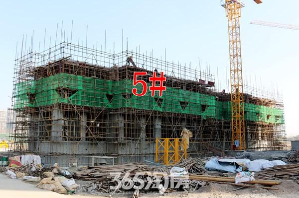 信德悦城5#楼工程进度