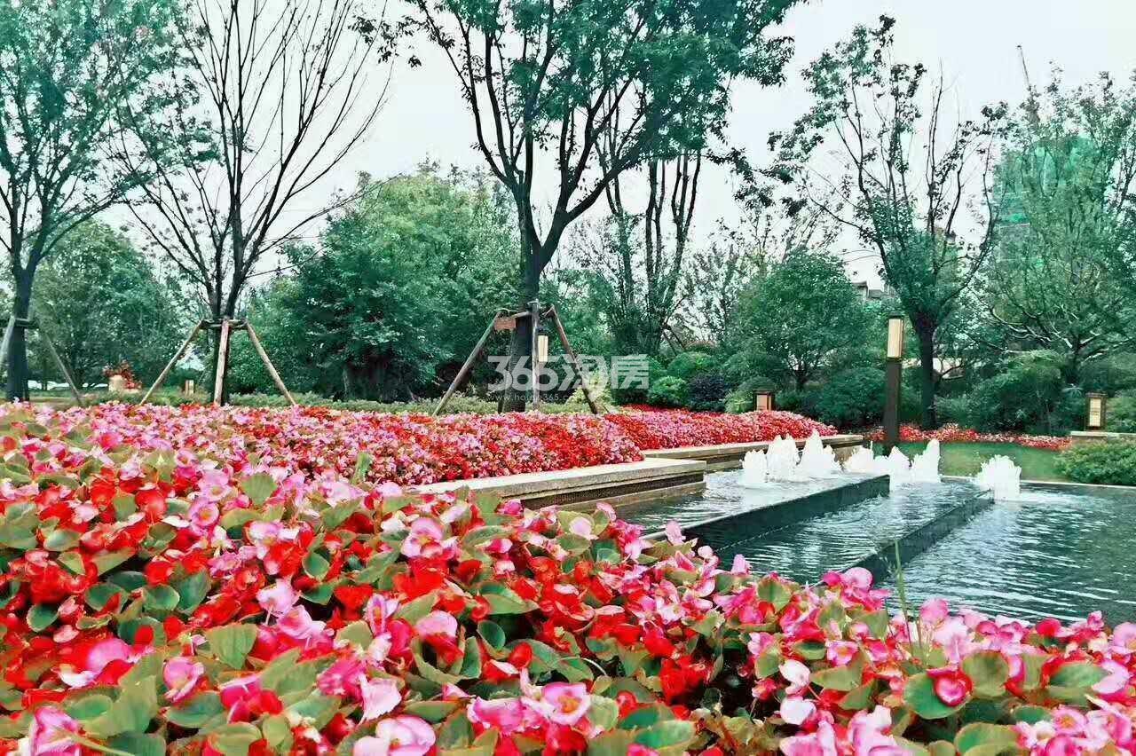 旭辉铂悦庐州府售楼部花坛环境实景图(2017.10.30)