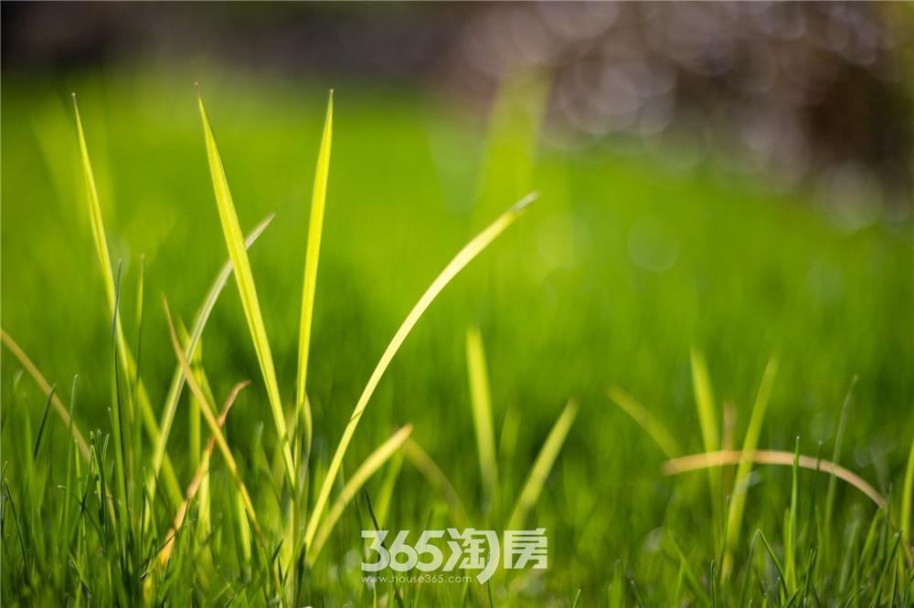 伟星芜湖院子东院园林实景,漫步其中别有一番韵味(2020年3月摄)