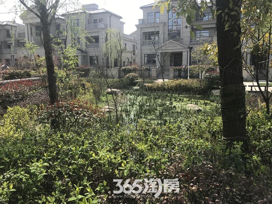 凤鸣湖公寓绿化图(2018.3摄)