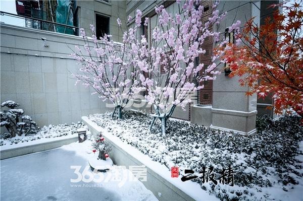伟星玖璋台雪景景观-花草(2018.1摄)