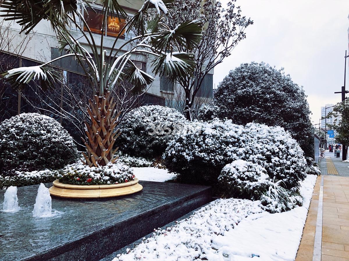2018年1月滨江保利翡翠海岸售楼处外部一角实景