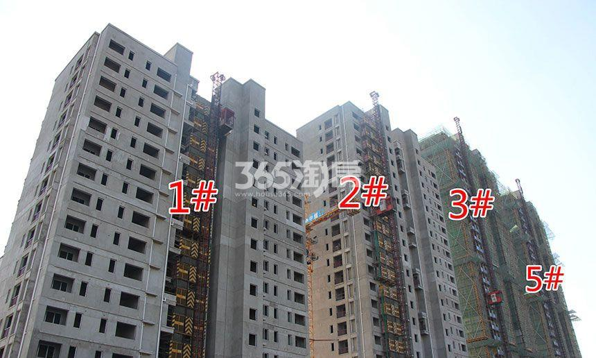 祥源金港湾1#、2#、3#、5#楼工程进度(2018.1.29)