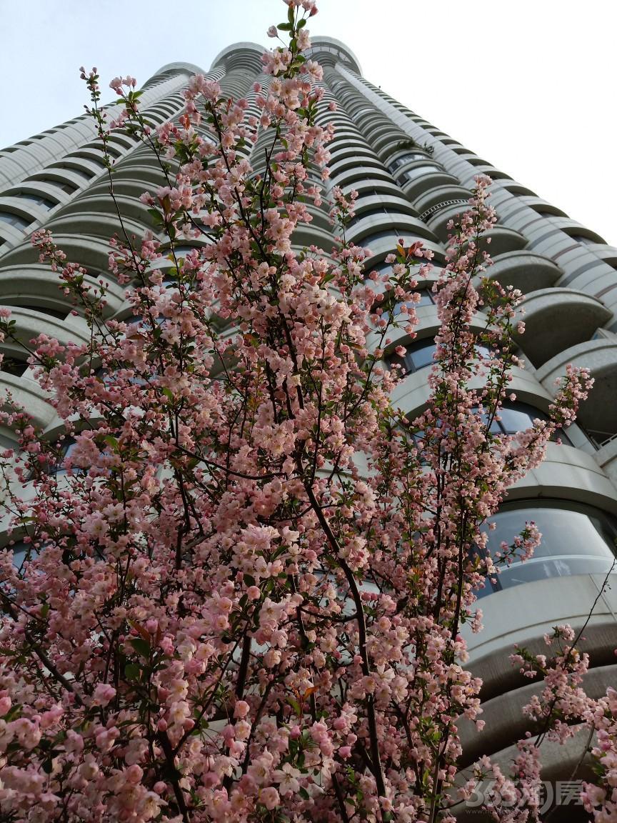 苏宁滨江壹号4室2厅3卫200平方米920万元