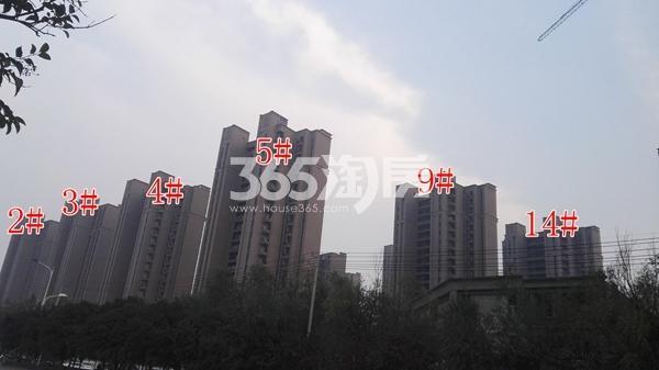 恒大滨河左岸一期部分楼栋工程实景(11.8)