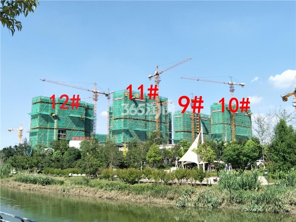 珍宝岛熙悦府9、10、11、12#楼实景图(8.27)