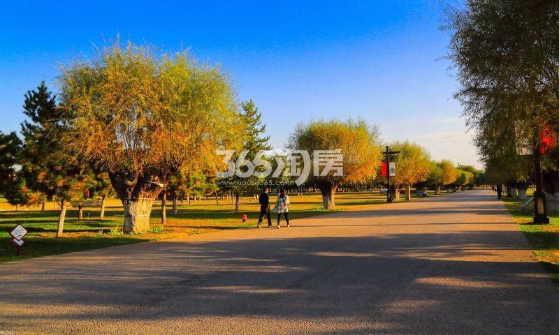 白桦林明天二期(北区)实景图
