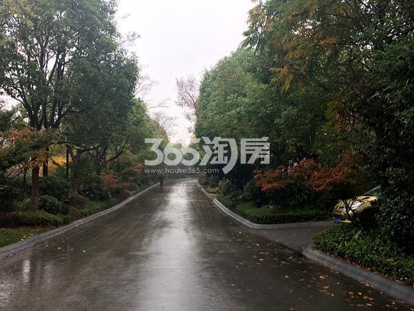 弘阳三万顷小别小区内道路绿化实景图(2017.11摄)