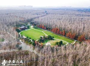 俯瞰合肥滨湖湿地公园 半园绿意半园冬