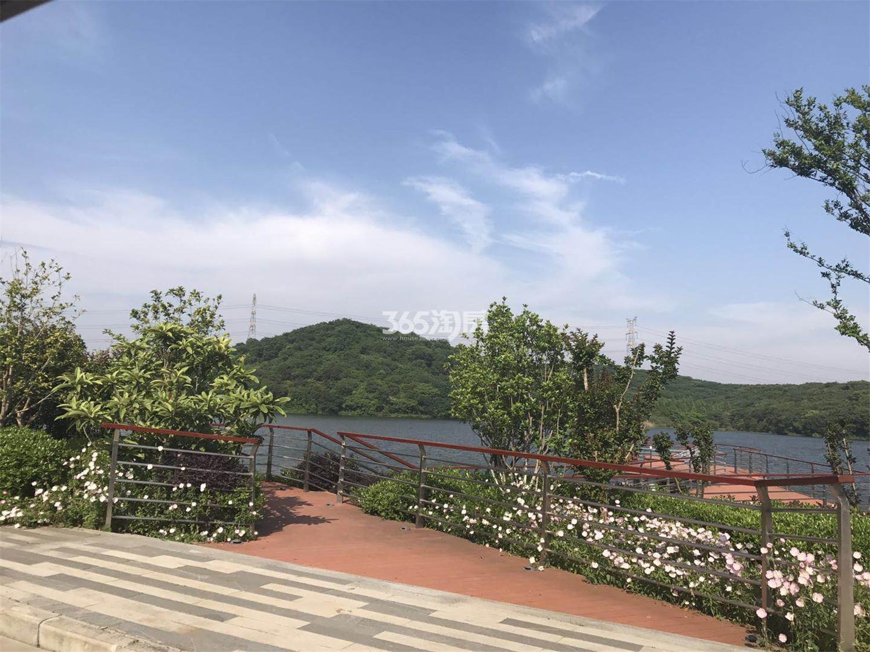 瑞安翠湖山小区绿化(6.18)