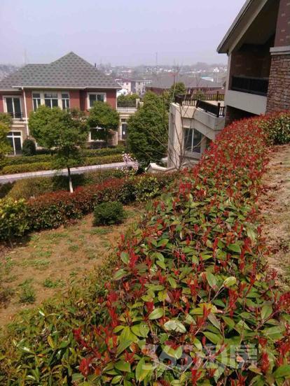 香山庄园6室2厅5卫独栋别墅